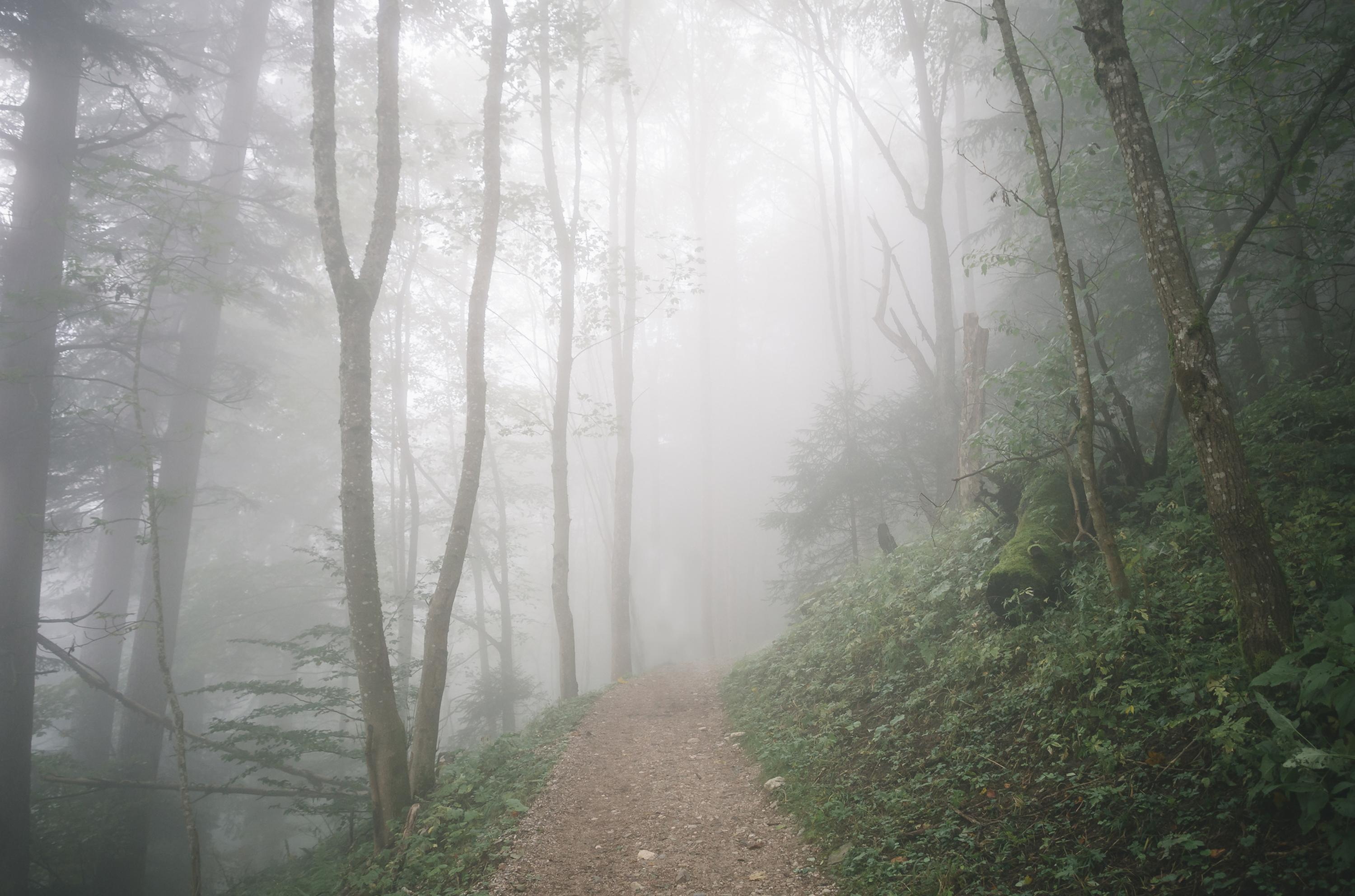 Straight-on shot of a foggy trail in a forest full of trees and green shrubbery.
