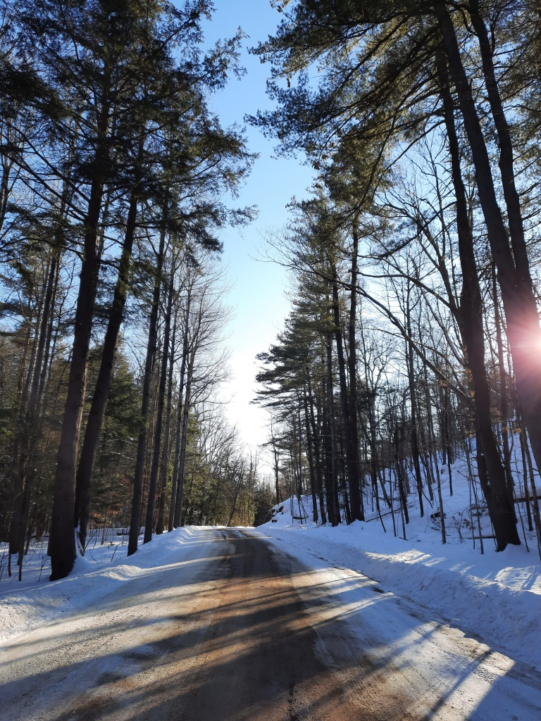 Picture of a dirt road with tall coniferous trees on either side that rise up into a blue sky. There are snowbanks on either side of the road. A glimmer of sunlight is visible on the right.