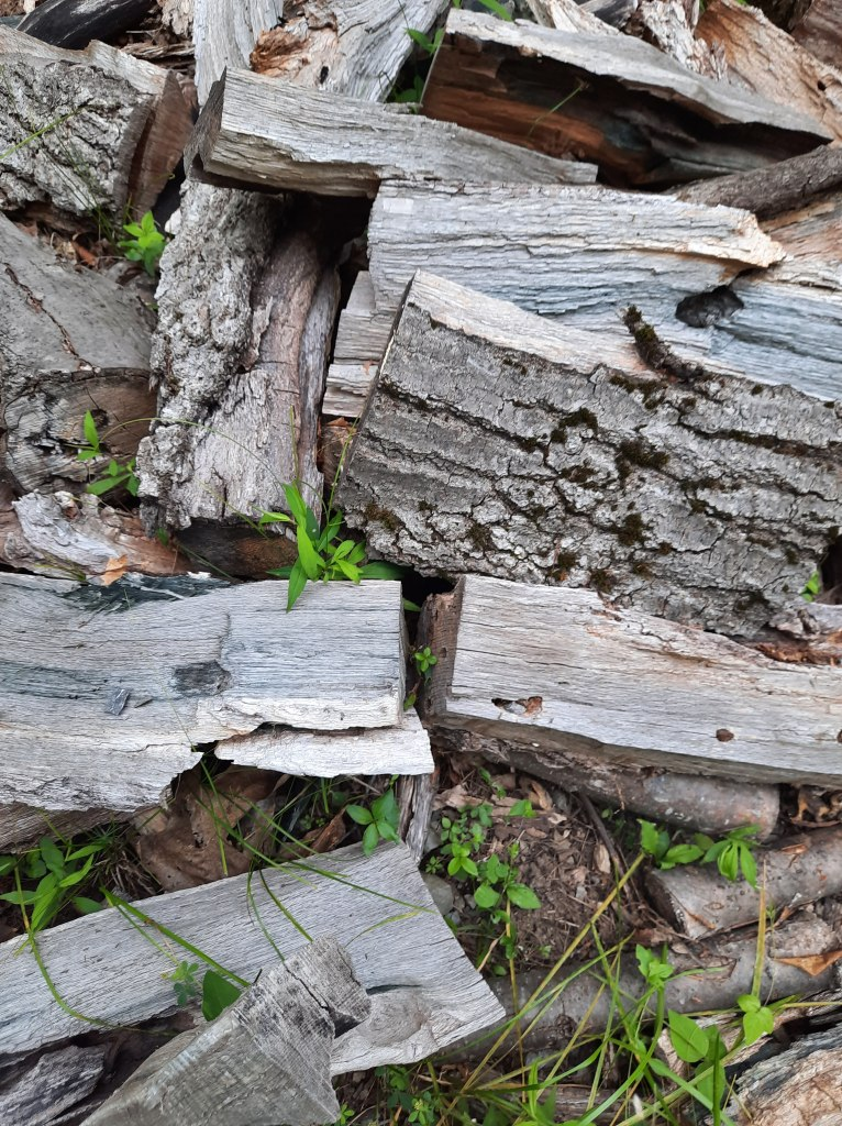 Close-up photo of a pile of chopped wood on the ground with green leafy plants and grass growing here and there through the cracks.